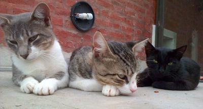 catswaiting2